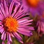 specials-flower